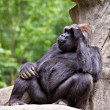 Gorilla — Stock Photo #9208825