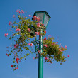 Lamp post with flower basket — Stock Photo #9208854