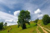 Paisagem com árvores e feno pilha no prado — Foto Stock