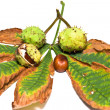 Chestnuts and leaf — Stock Photo