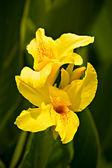 Spring yellow flowers — Стоковое фото