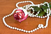 Withered rose with pearls — Stock Photo