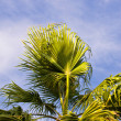 Palm tree — Stock fotografie