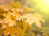 Autumn leaves background with sunlight — Stock Photo
