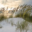 Grass in sand dunes at sunset — Stock Photo