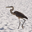 Stock Photo: Big Heron