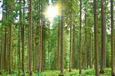 A sunny day in green forest — Stock Photo