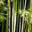 Trees of a bamboo with leaf — Stock Photo