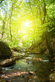 Forest moutain stream — Stock Photo