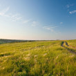 Evening in a summer steppe — Stock Photo #9370114