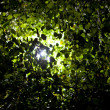 Stock Photo: Light shining through tree leaves