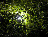 Light shining through tree leaves — Stock Photo