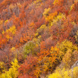 Stock Photo: Autumn trees on mountain hills