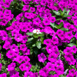 Flower Bed — Stock Photo #9536615