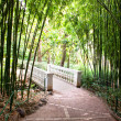 Bamboo garden with river and bridge — Stock Photo