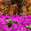 Flower Bed — Stock Photo #9536949