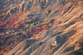 Autumn trees on the mountain hills — Stock Photo