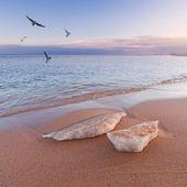 Winter sea landscape — Stock Photo