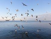 Sea gulls — Stock Photo