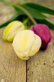 три тюльпана на старый сад таблицы — Стоковое фото