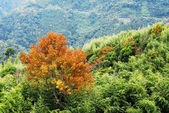 Paisaje de otoño colorido — Foto de Stock
