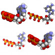 Adenosine triphosphate (ATP) molecule - Stock Photo