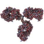 Immunoglobulin G (IgG, antibody) molecule — Stock Photo