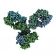 Immunoglobulin G (IgG, antibody) molecule — Stock Photo