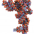 Transfer RNA (tRNA) molecule - Stock Photo