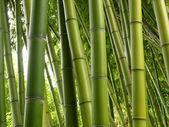 Bamboo jungle — Stock Photo