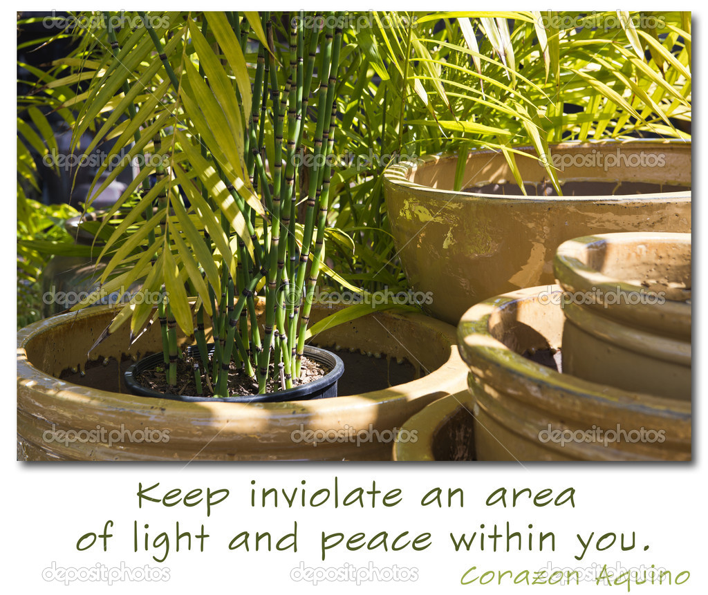 An area of light and peace with ceramic pots and bamboo plants. The quote says Keep invoilate an area of light and peace within you. - Corazon Aquino — Stock Photo #9938923