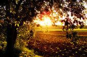Sun Fields — Stock Photo