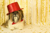 Party Dog in a Red Top Hat — Stock Photo