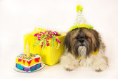 Geburtstag Hund — Stockfoto