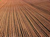 Rolnictwo — Zdjęcie stockowe