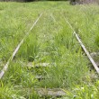 Old tracks in an upland moor in Bavaria, Germany — Stock Photo