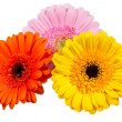 Three Gerbera flowers isolated on white — Stock Photo