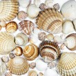 Collection of various seashells on white background - Stock Photo