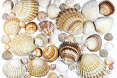 Collection of various seashells on white background — Stock Photo