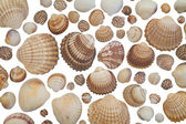 Collection of seashells on white background — Stock Photo