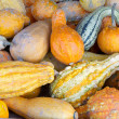 Stock Photo: Selection of ornamental pumkins on display