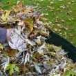 Collecting autumn foliage — Stock Photo