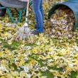 Raking autumn foliage — Stock Photo
