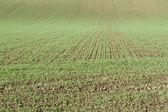 Farming in autumn in Bavaria, Germany — Stock Photo