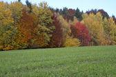 Piękny jesienny las w bawarii, niemcy — Zdjęcie stockowe