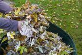 Raccolta di fogliame di autunno — Foto Stock