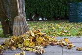 Rastrellare foglie autunnali — Foto Stock