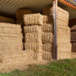 Stock Photo: Storing hay balls in autumn