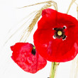 Stok fotoğraf: Blooming poppy (Papaver Rhoeas) with barley