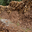 A pile of wood logs - Foto de Stock  